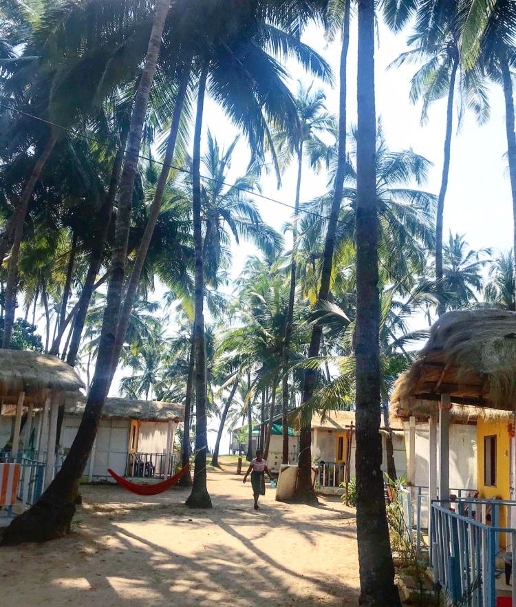 Palms and huts Palolem beach Goa